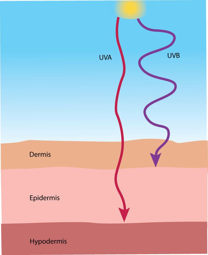 uva rays and uvb rays